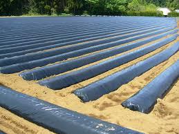 drip irrigation and plastic mulch