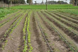 drip irrigation in epe lagos