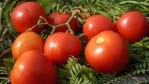 cobra f1 tomato seeds