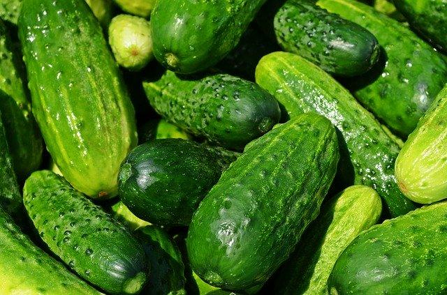 dry season cucumber farming in nigeria