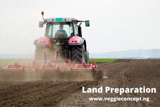 land preparation for watermelon production